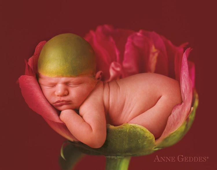 Anne Geddes Anne Geddes Art Prints Posters Home Decor Greeting