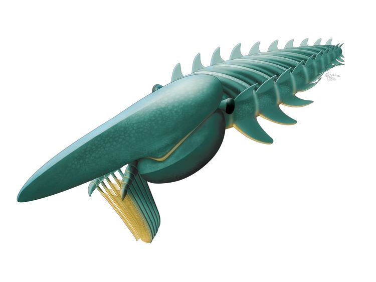 Anomalocaridid Palaeocast Palaeontology podcasts