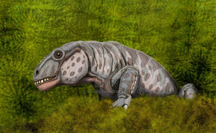 Anomocephalus Anomocephalus africanus by DiBgd on DeviantArt