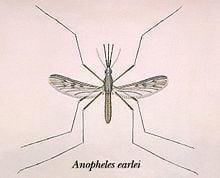 Anopheles earlei httpsuploadwikimediaorgwikipediacommonsthu