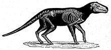 Anoplotherium httpsuploadwikimediaorgwikipediacommonsthu