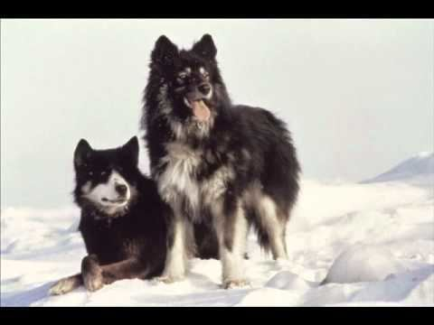 Antarctica (1983 film) BO Antarctica 1983 Les prils de lAntarctique Vangelis YouTube