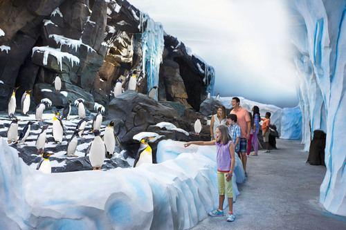 Antarctica: Empire of the Penguin Antarctica Empire of the Penguin is Now Open at SeaWorld Orlando