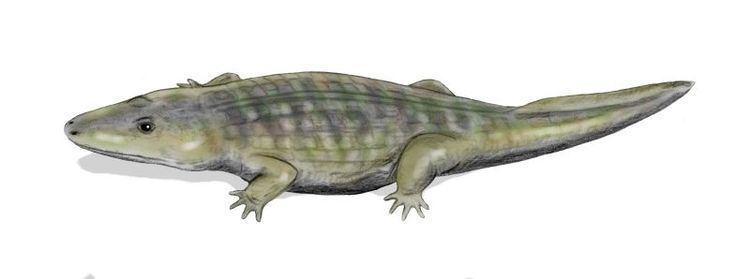 Antarctosuchus