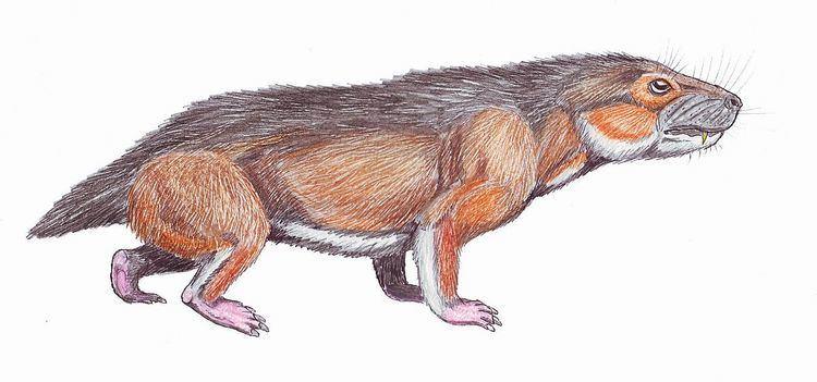 Antecosuchus