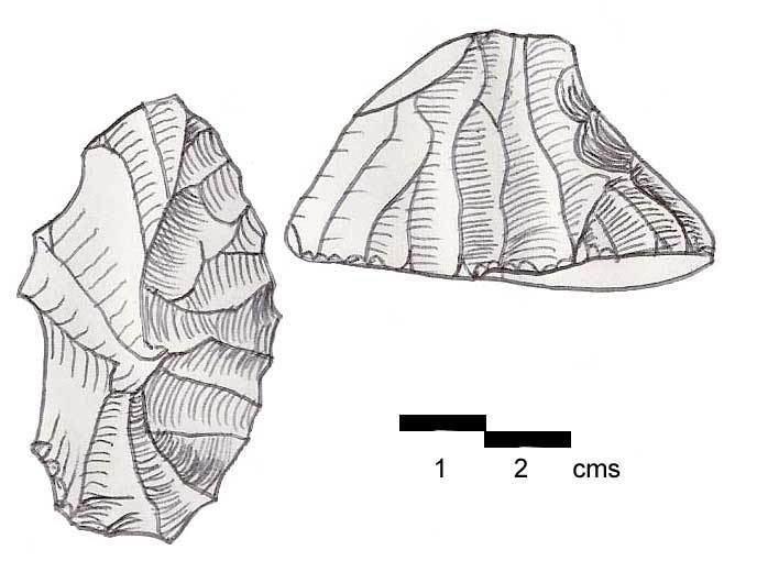 Antelian