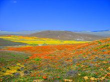 Antelope Valley httpsuploadwikimediaorgwikipediacommonsthu