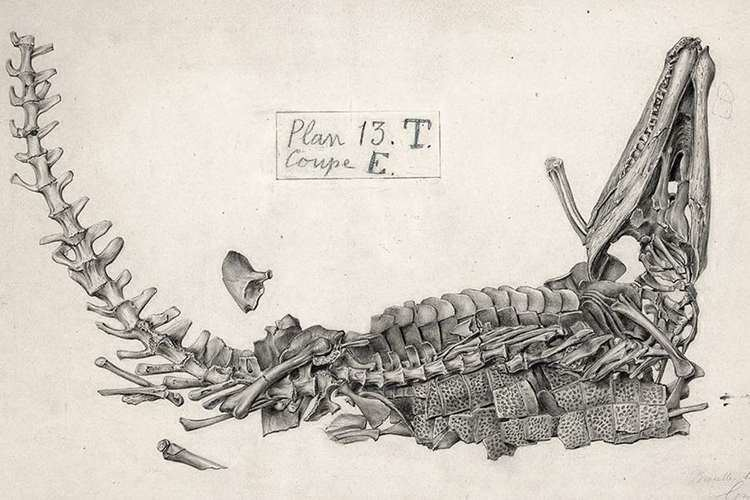 Anteophthalmosuchus