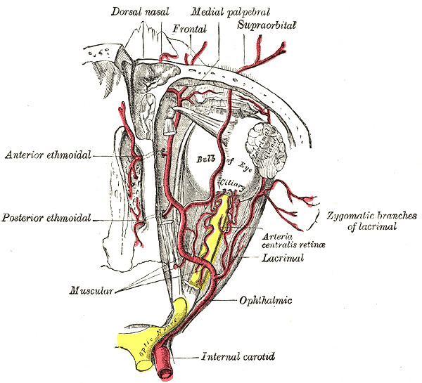 Anterior ethmoidal artery