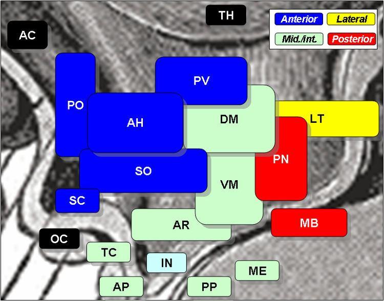 Anterior hypothalamic nucleus