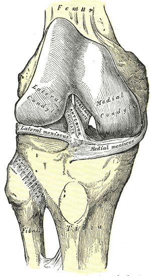Anterior ligament of the head of the fibula