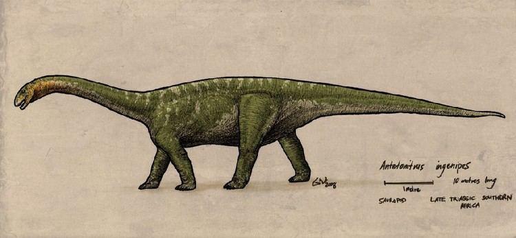 Antetonitrus Antetonitrus Pictures amp Facts The Dinosaur Database