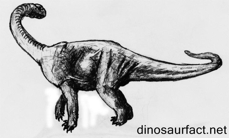 Antetonitrus Antetonitrus dinosaur