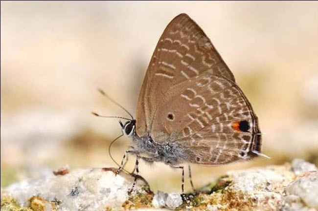 Anthene ButterflyCircle Checklist