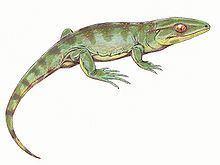 Anthracosauria httpsuploadwikimediaorgwikipediacommonsthu