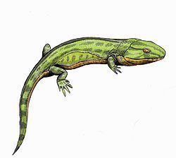 Anthracosauria Caerorhachis Wikipedia