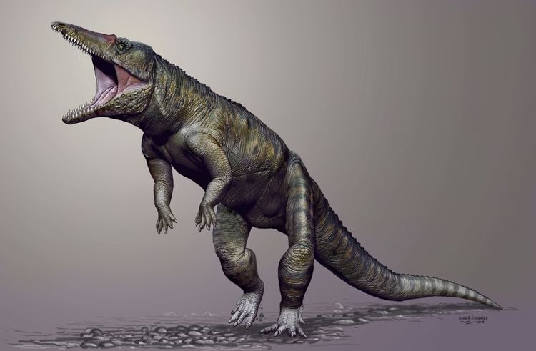 Anthracosuchus Carolina Butcher Prehistoric crocodiles walked on hind legs and