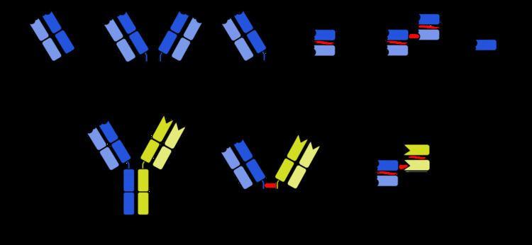Antibody mimetic
