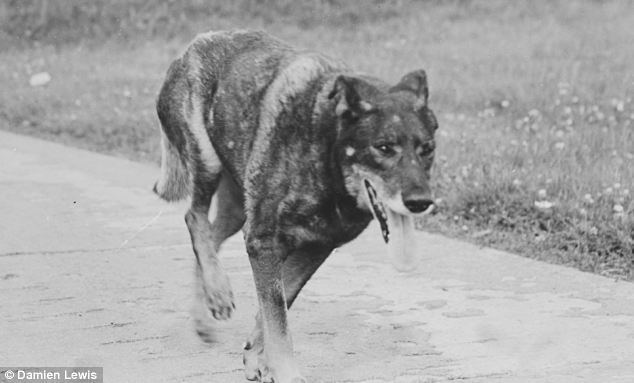 Antis (dog) So loyal so brave the dog who flew against the Luftwaffe and was