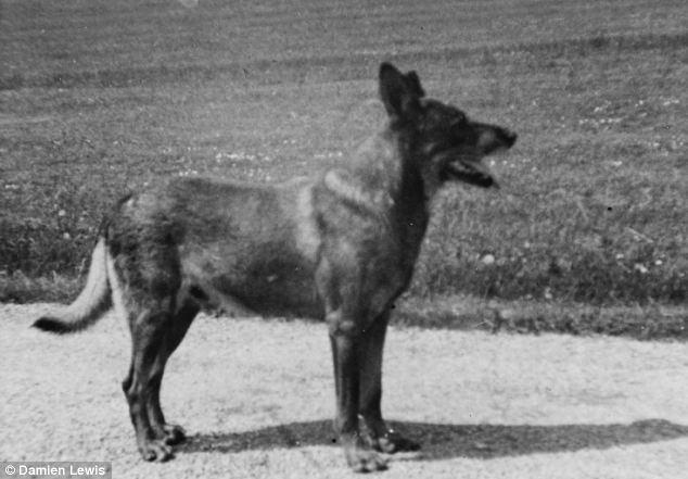 Antis (dog) Old War Movies THE WORLD AT WAR