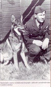 Antis (dog) Vlcak Antis a true wolfdog hero that deserves a movie Dog Actors