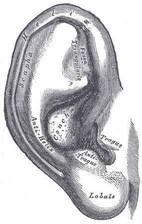 Antitragus