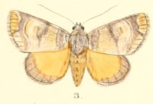 Antitrisuloides