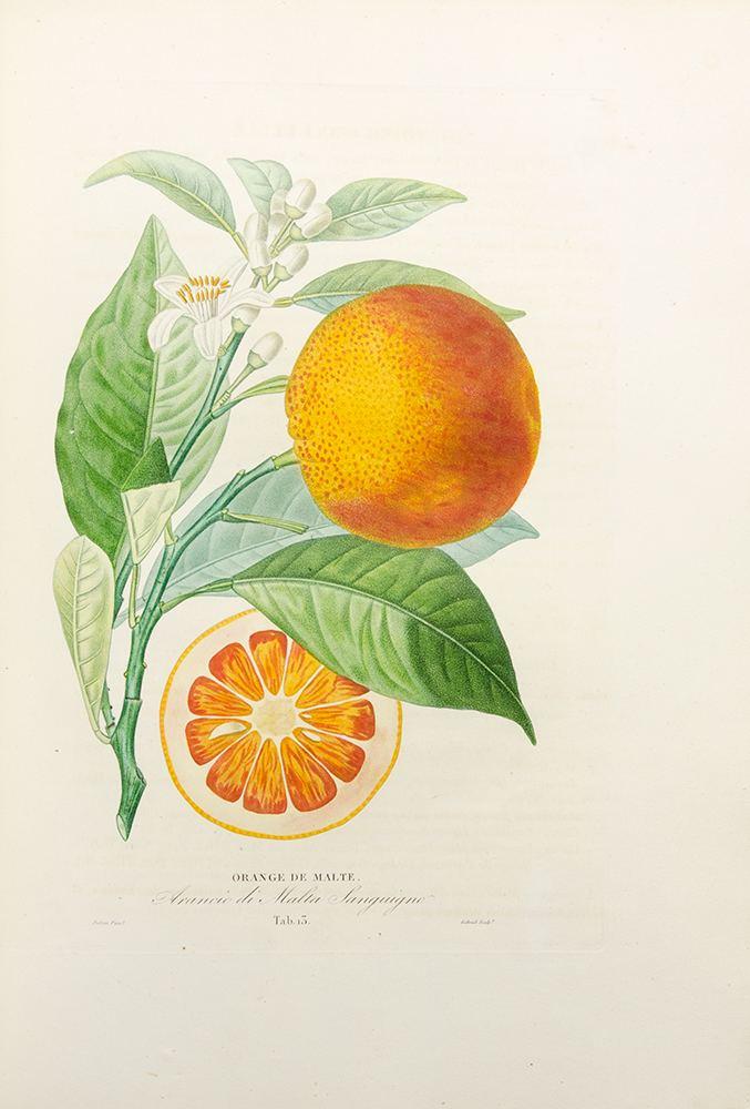Antoine Risso Histoire Naturelle des Orangers Joseph Antoine RISSO Pierre