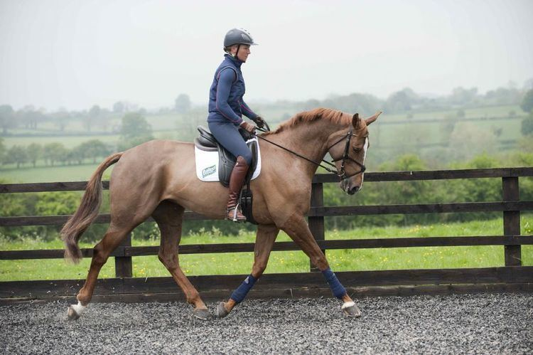 Aoife Clark 5 Things you didn39t know about Blenheim winner Aoife Clark