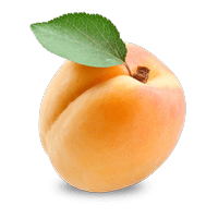 Apricot Apricot PNG images free download