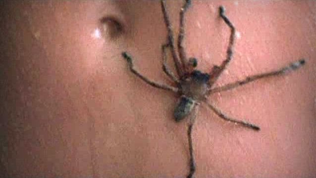 Arachnophobia (film) movie scenes  my own arachnophobic tendencies I ve always been a spider nut and I totally saw this on the big screen back in 1990 I sat through most of the movie