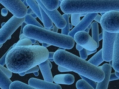 Archaea Archaea ap bio kingdom systems
