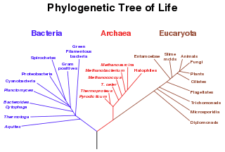 Archaea Archaea New World Encyclopedia