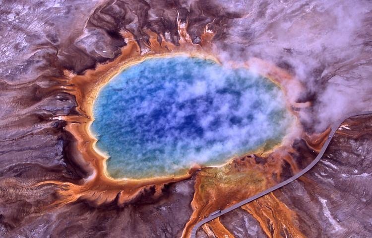 Archaea Archaea Wikipedia