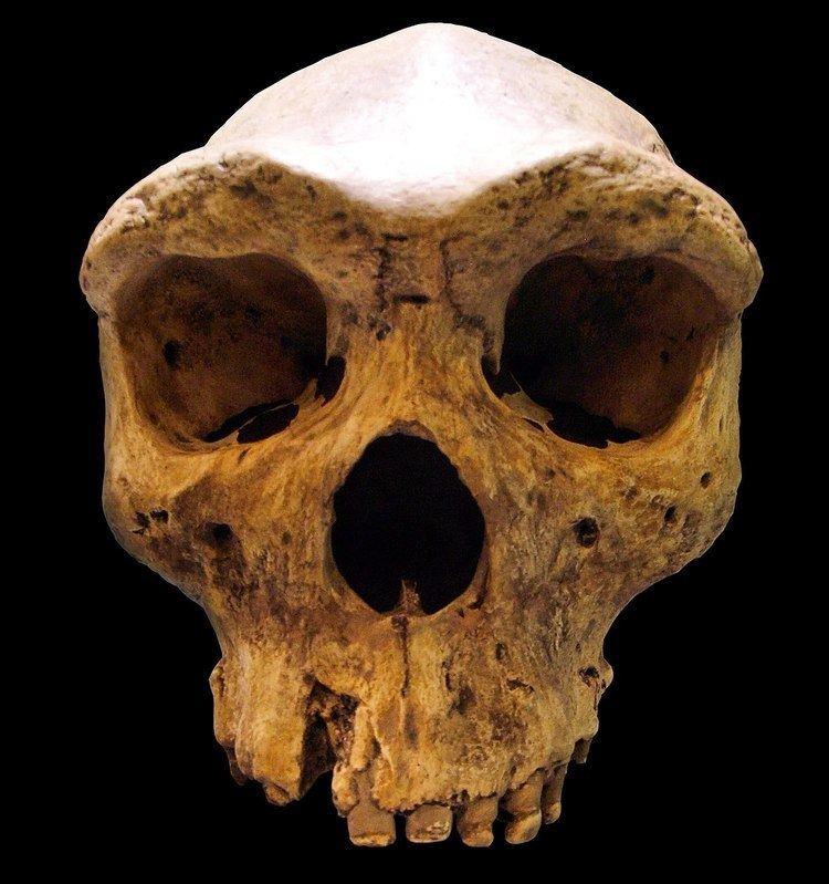 Archaic humans