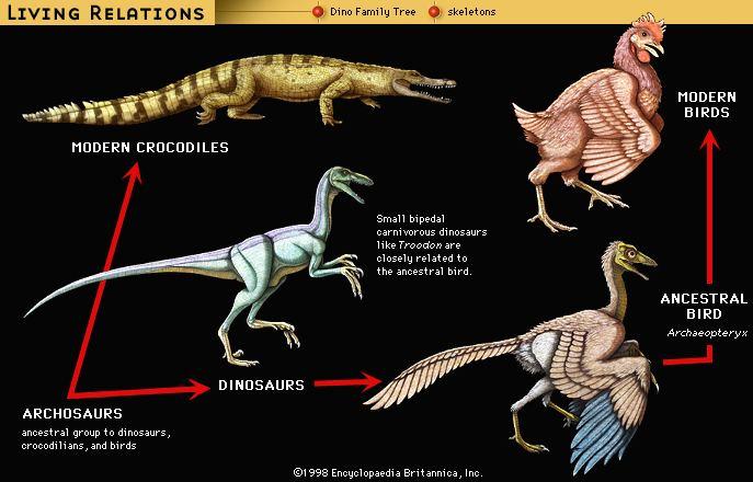 Archosaur archosaur Characteristics amp Phylogeny Britannicacom