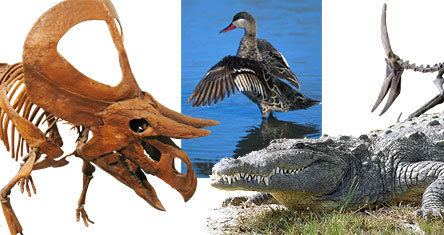 Archosaur wwwucmpberkeleyedudiapsidsarchosaursjpg
