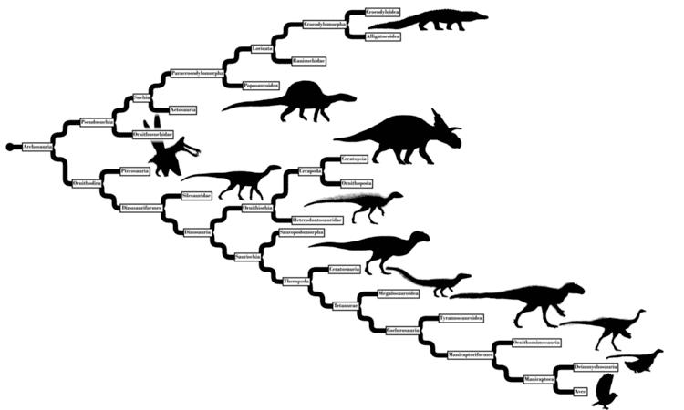 Archosaur Archosaur Phylogeny From Calender by Tomozaurus on DeviantArt