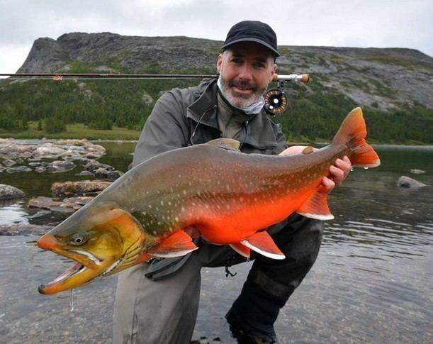 Arctic char Big Fishes of the World ARCTIC CHAR Salvelinus alpinus