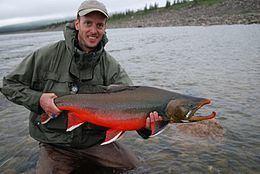 Arctic char httpsuploadwikimediaorgwikipediacommonsthu