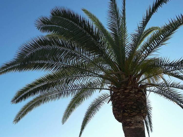 Arecaceae palm sky arecaceae arecaceae mix