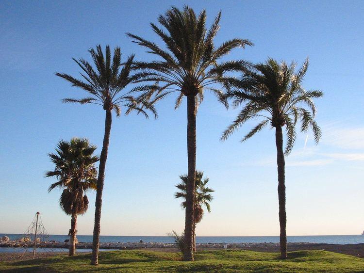 Arecaceae Palms Family Arecaceae iNaturalistorg