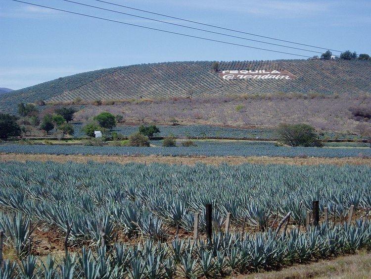 Arette (tequila)