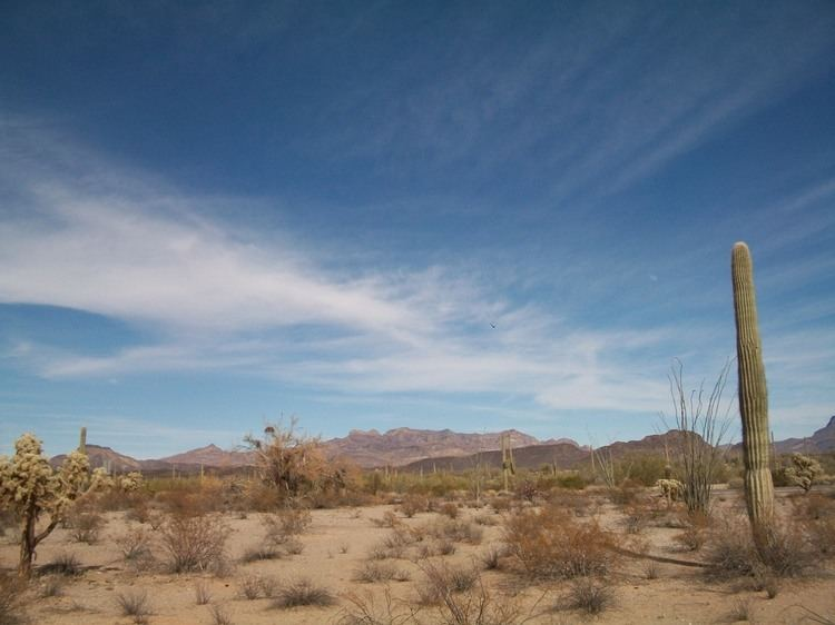 Arizona Sky Arizona Sky 365052 Musings Mischief and Mayhem