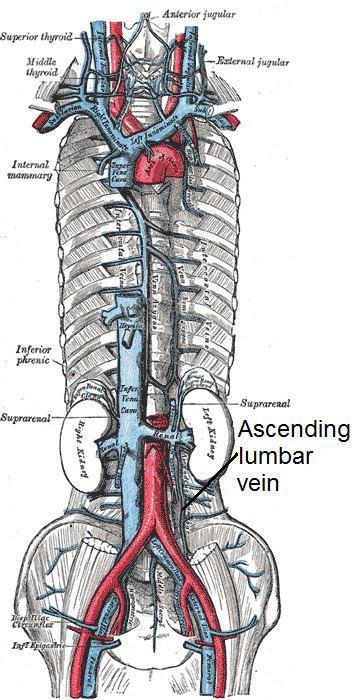 Ascending lumbar vein