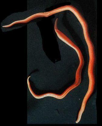 Aschelminth 2bpblogspotcomVF2nGPZN9iwUHucZ1zaIKIAAAAAAA