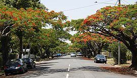 Ascot, Queensland httpsuploadwikimediaorgwikipediacommonsthu