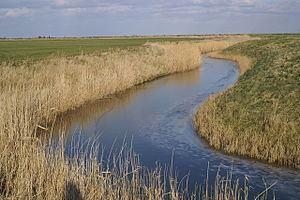 Asheldham Brook httpsuploadwikimediaorgwikipediacommonsthu