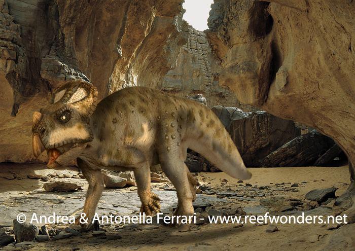 Asiaceratops httpssmediacacheak0pinimgcomoriginalsb1
