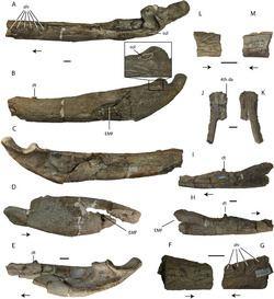 Asiatosuchus httpsuploadwikimediaorgwikipediacommonsthu